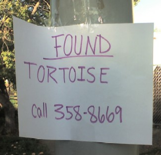 Sign for Found Tortoise in Belwood of Los Gatos