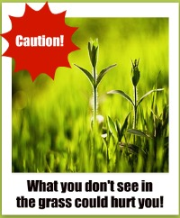 Caution in the grass