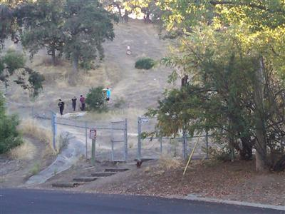 "About a half dozen kids gather to slide down ""cardboard hill"" at Belgatos Park in Los Gatos"