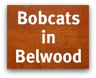 Bobcats in Belwood of Los Gatos