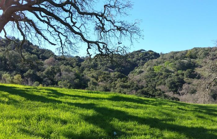 Hills behind Ridge Trail - Sierra Azul range