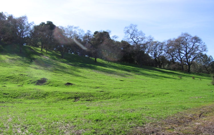 Cardboard hill